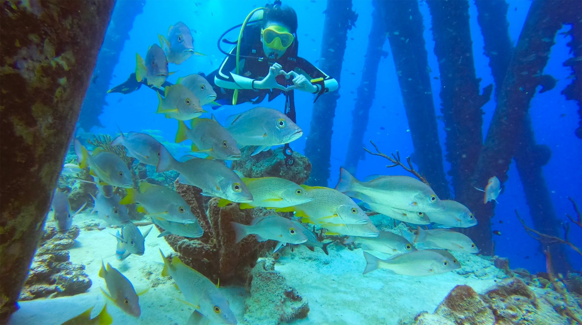 Onze eerste duikvakantie naar Bonaire